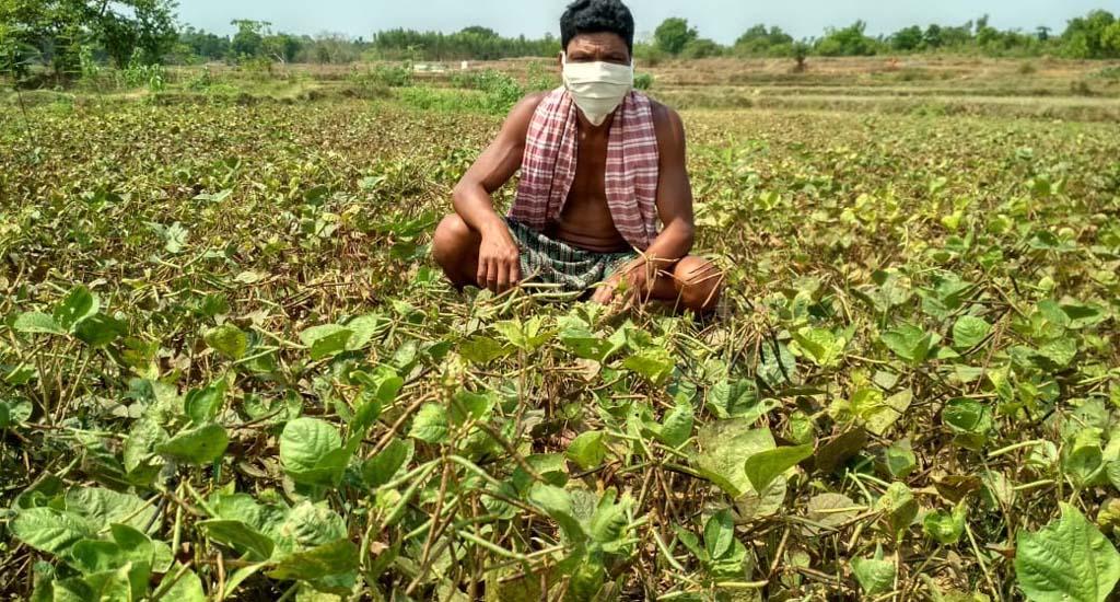 महामारी के बाद के विभिन्न उपाय कृषि-अर्थव्यवस्था को स्थिरता प्रदान ..