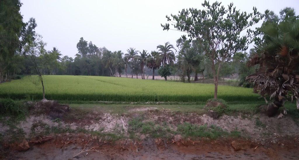 सुंदरबन के संघर्षरत ग्रामीणों को अम्फन ने दिया एक गंभीर झटका