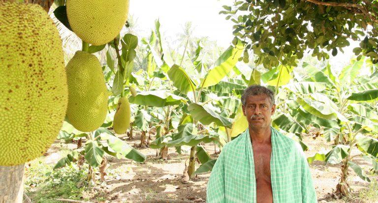 गुजारे लायक खेती से एग्रोफोरेस्ट्री (कृषि-वन) और समृद्धि तक