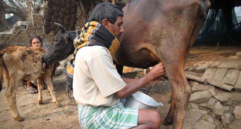 आदिवासी क्षेत्रों के लिए दूध उत्पादन में बहुत बड़ी संभावनाएं ..