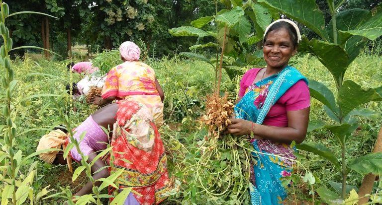 सुंदरगढ़ की आदिवासी महिलाओं ने जैविक खेती को अपने जीवन ..