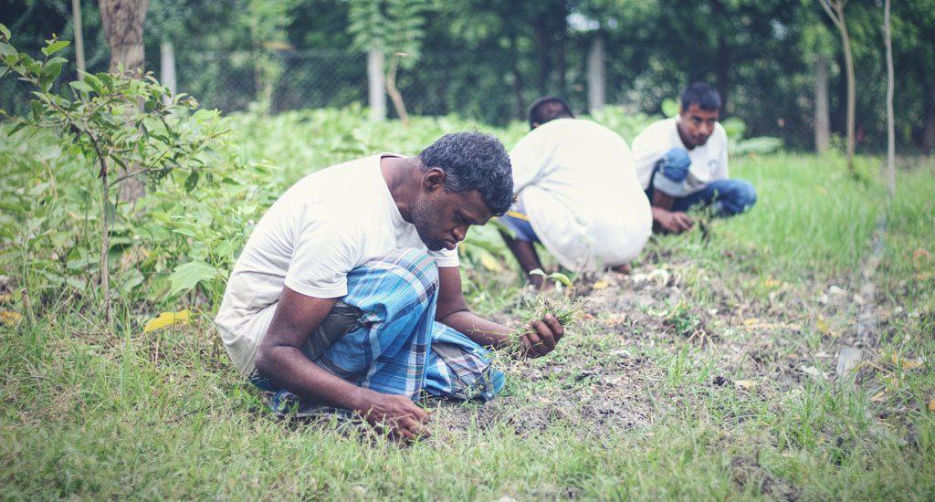 बौद्धिक रूप से अक्षम लोगों के लिए, उपचार साबित होती है खेती