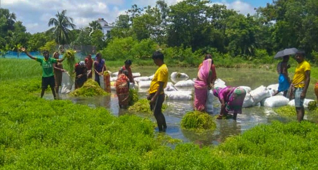 सागर द्वीप के किसानों के लिए, औषधीय जड़ी-बूटियों से आई समृद्धि