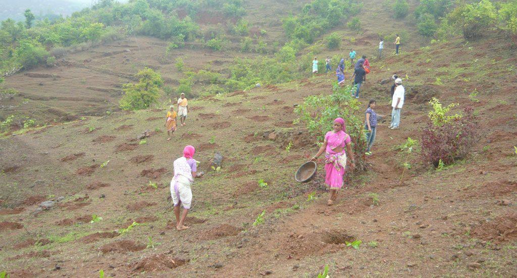 टिकाऊ भविष्य के लिए समुदायों ने निजी जंगलों का किया पुनरुद्धार