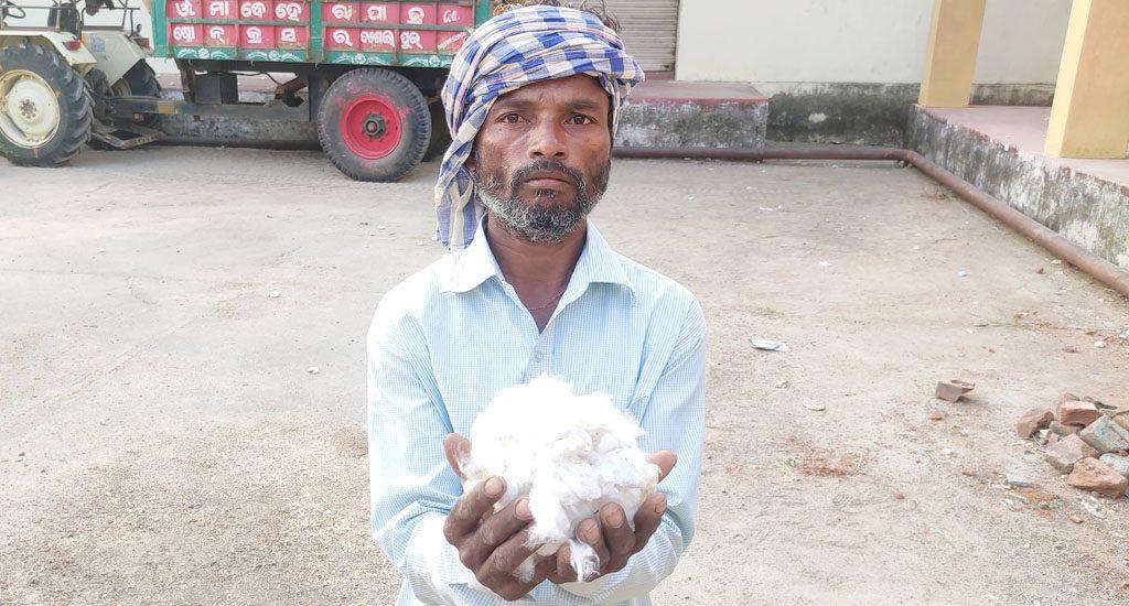 गंजम के किसानों के लिए, नकद फसल कपास ने खोई चमक
