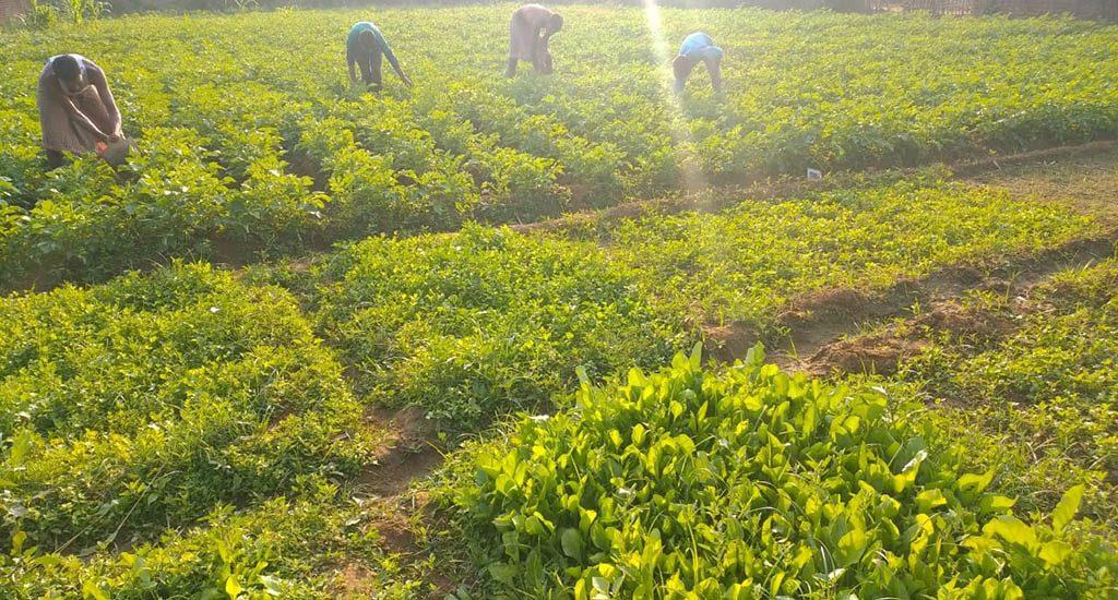 मदद के लिए बढ़े हाथों ने, भुखमरी के कगार पर पहुंचे झारखंड के किसानों को बचाया
