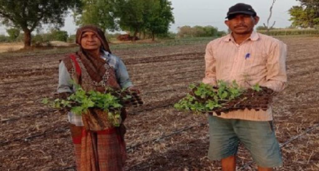 तरबूज लाया किसानों के जीवन में लालिमा