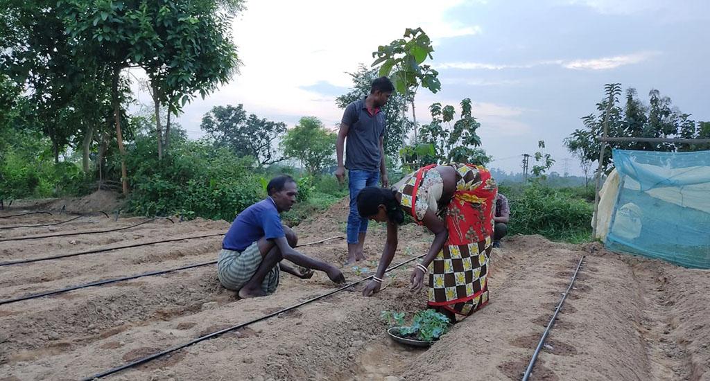 आदिवासी महिलाओं ने सामूहिक खेती से उठाया लाभ