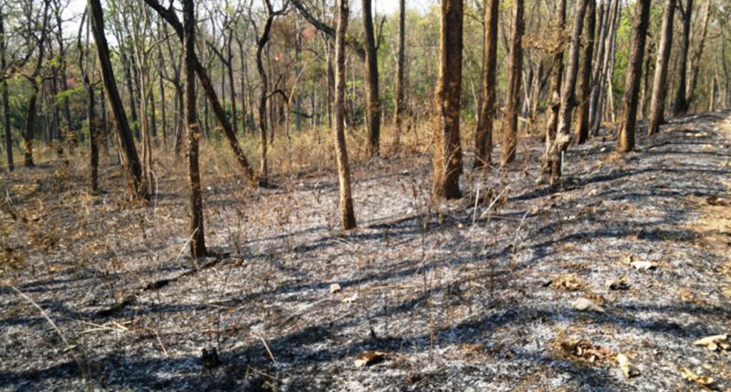 जंगल की आग के कारण वन-आश्रित जनजातियों की आय में ..