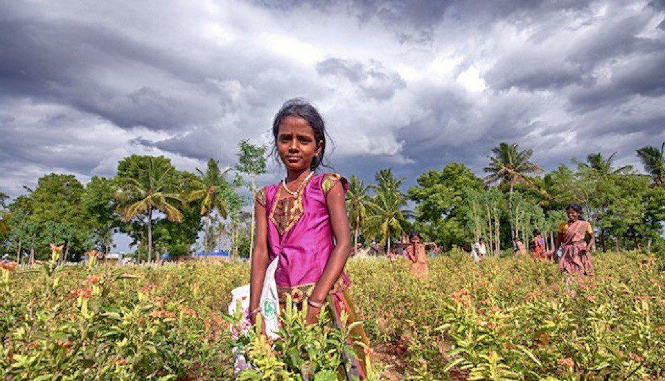 A storm brewing over a Kanakambara flower farm in Tamilnadu.  (Photo by Prabhu B Doss)