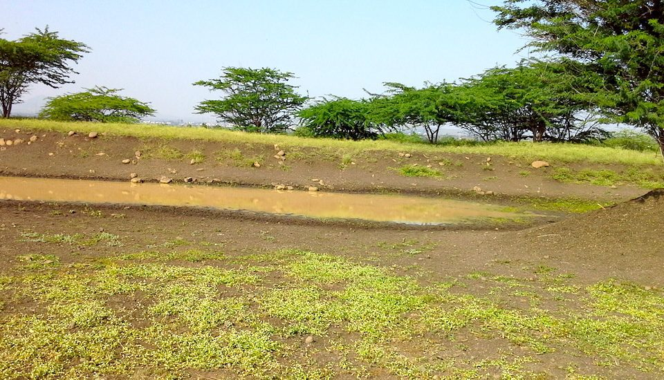 Contoured trenches help prevent water run-off in Kumbharwalan village. (Photo by Gouri Agtey Athale)