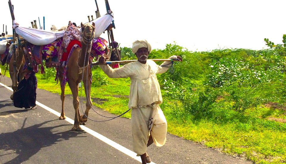 Rabaris move with their camels and belongings on the edge of a highway in Kachchh.