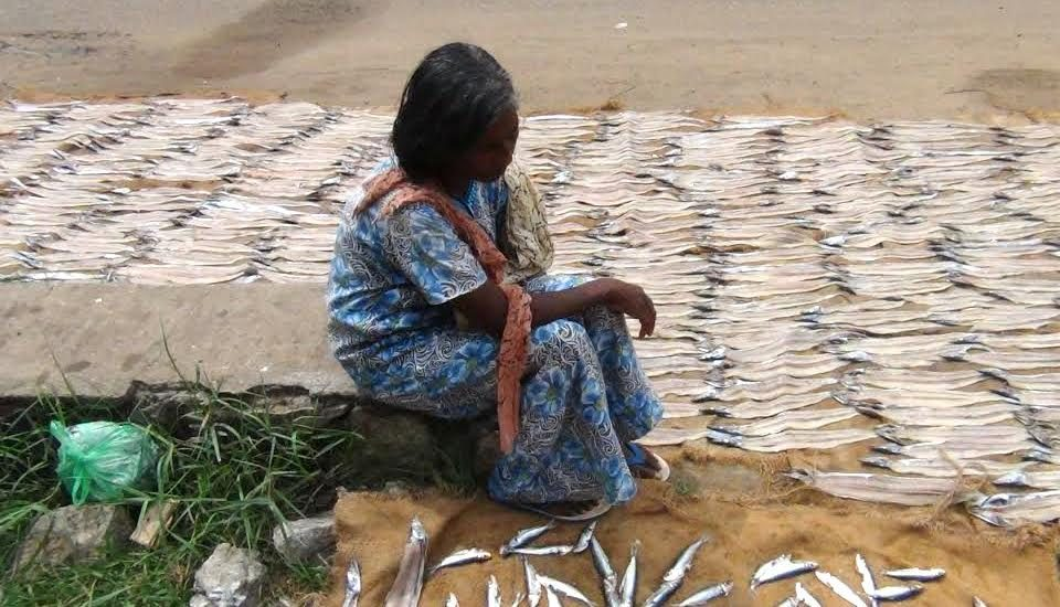 Unsold fresh fish being dried to be sold in packets. (Photo by K. Rajendran)