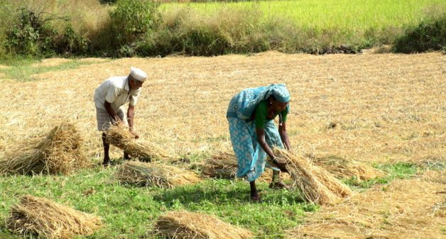 Farmers of Khoch are able to only cultivate a monsoon crop due to lack of irrigation. (Photo by Nidhi Jamwal)