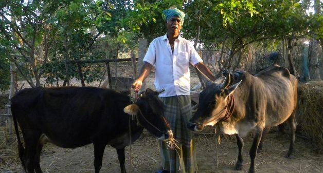 R. Thilakar at his farm. (Photo by Sharada Balasubramanian)