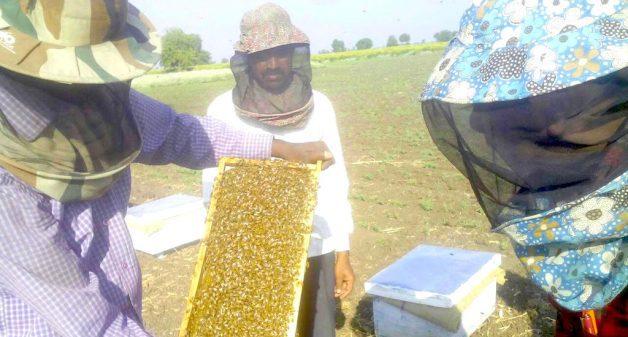 Impure honey eats into small producers' margins