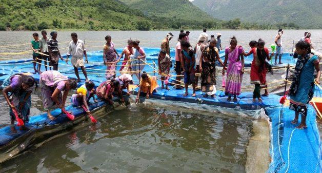Communities in Andhra Pradesh find success in inland fisheries