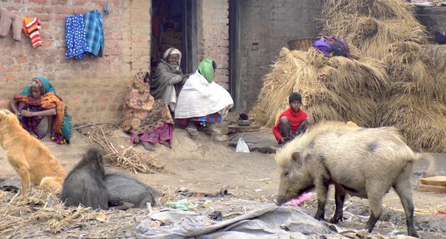 Musahars in Bihar struggle to educate their children