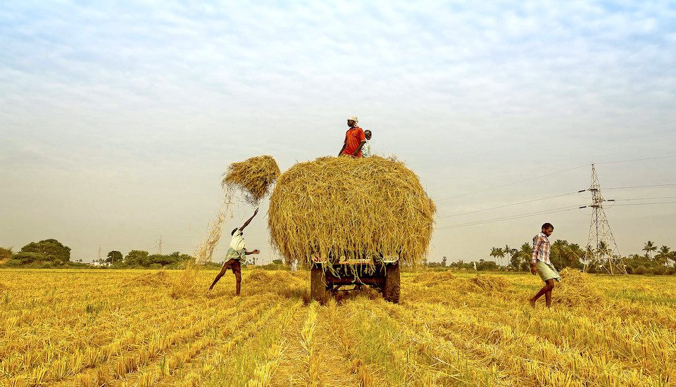 The 2017-18 budget has made notable allocations for agriculture and allied activities. (Photo by Kannan Muthuraman)