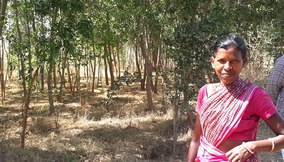 Villager Agni Devi at a papaya garden that is a part of the Hesatu forest. (Photo by Chhandosree)