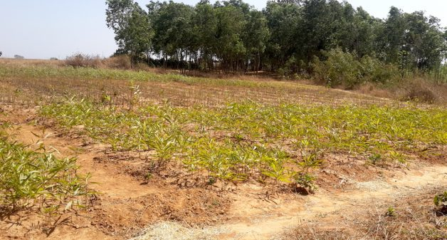 A nursery adjacent to the Hesatu forest from which villagers expect to sell saplings. (Photo by Chhandosree)