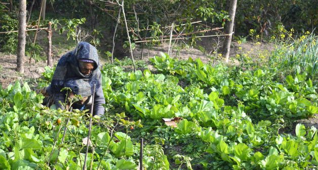 A woman in Sikkim working in her organic vegetable farm. (Photo by Athar Parvaiz)