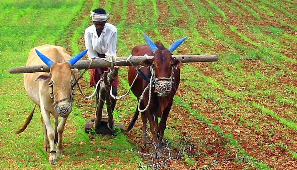Farmers in many parts of the country are unable to make a living from agriculture alone. (Photo by B.S. Ananth)