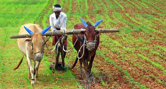 Are farmers collateral damage of modern economic growth?