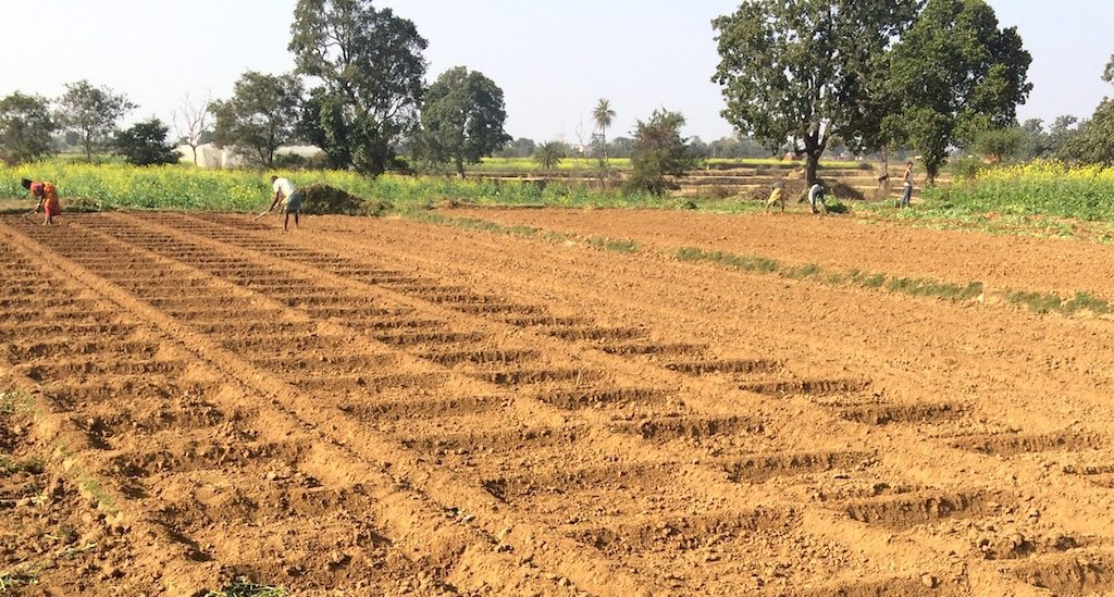 Small pumps hold promise for smallholder farmers in Jharkhand
