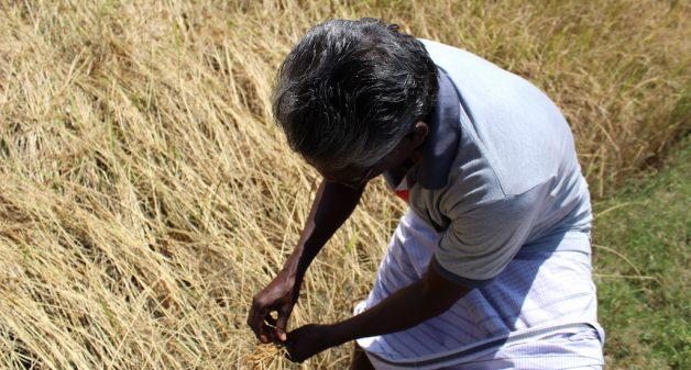 Farmers in coastal Tamil Nadu battle drought with smart farming