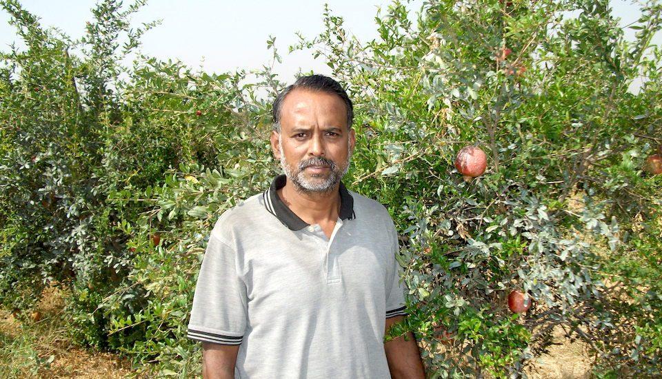 Vishwajit Akre of Ranwadi village at his pomegranate farm near Wardha. (Photo by Hiren Kumar Bose)