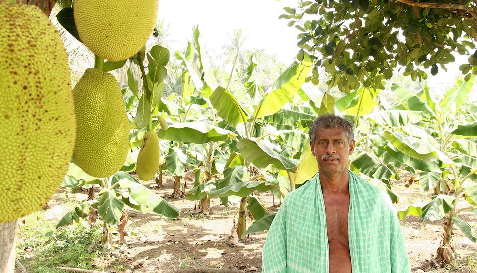 Farmer Jesuraj of Pudukottai in his farm where he practises agroforestry. (Photo by R. Samuel)