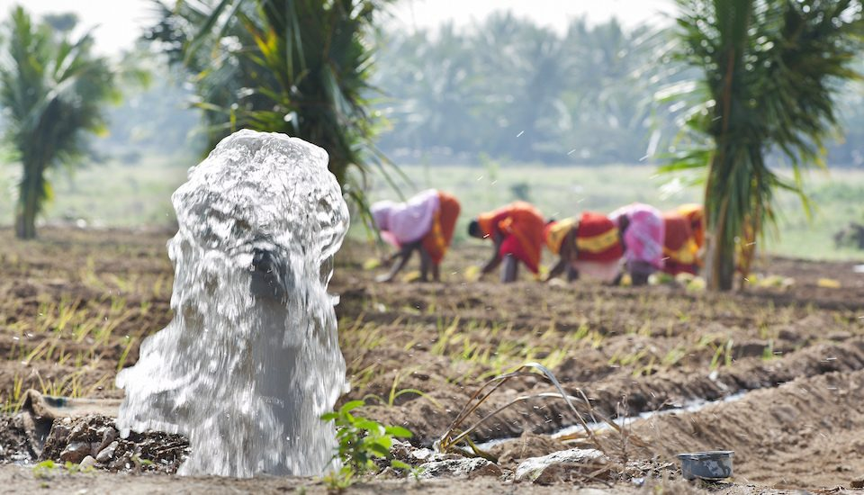 A small pump irrigating an onion farm. (Photo by Hamish John Appleby / IWMI)