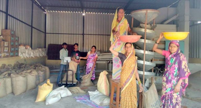 Farm produce is graded and weighed during procurement. (Photo courtesy MAHA Farmers Producer Company Ltd)