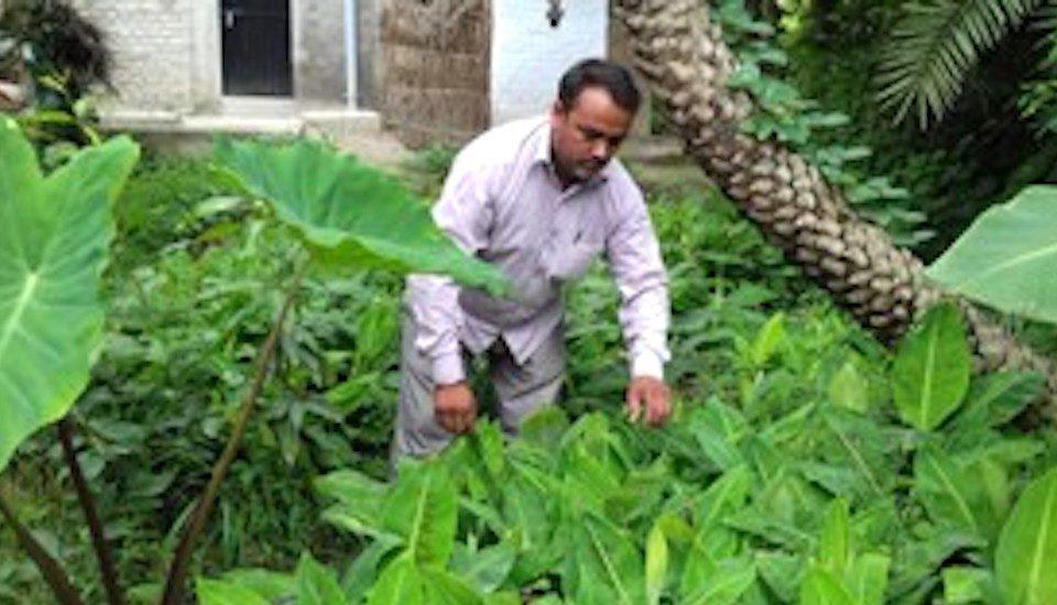 Farmer Dinesh Kumar of Machhahi village in Bihar has been promoting the use the curd mixture. (Photo by Mohd Imran Khan)