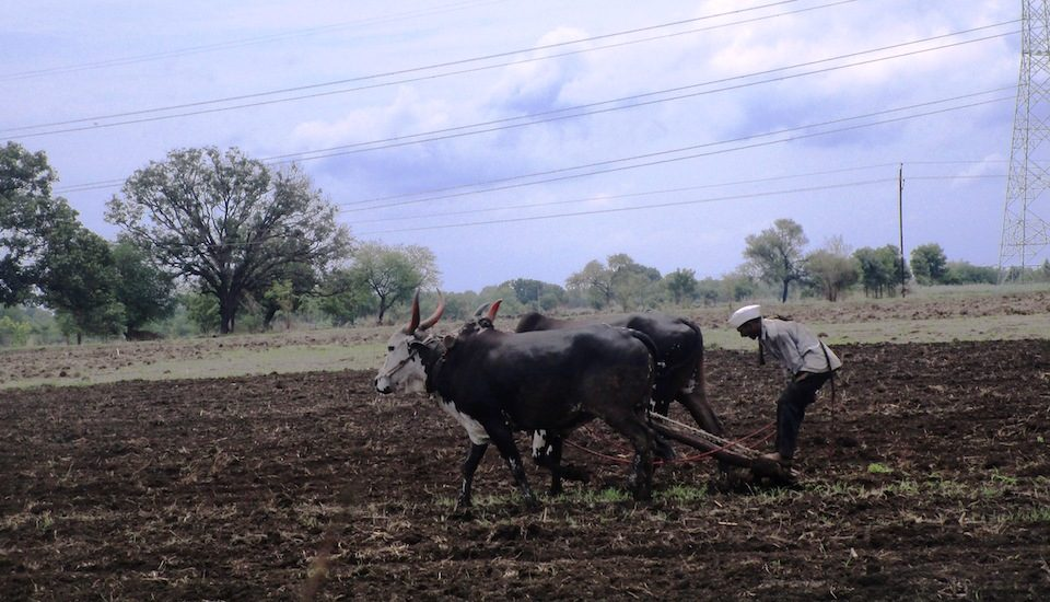 Marathwada farmers are fighting against all odds in the current kharif season. (Photo by Nidhi Jamwal)