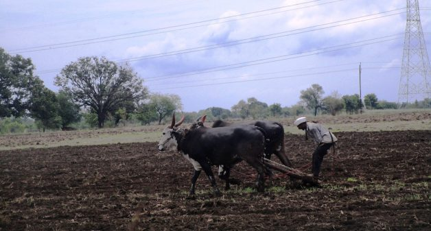 Farmers in Maharashtra fear loss of kharif harvest, blame Met ..