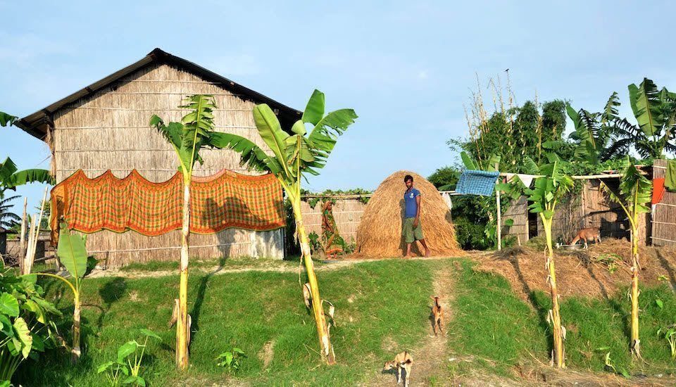 Houses on raised ground help char villagers stay safe during floods with banana trees and vegetable gardens preventing soil erosion. (Photo by Abdul Gani)