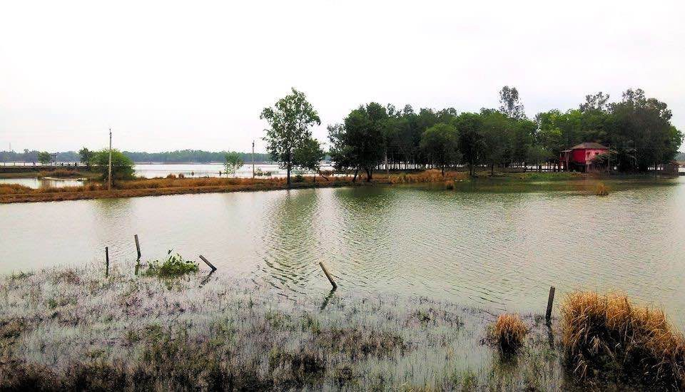 The flooding led to a watery grave for the crops. (Photo by Rajiv Palit)