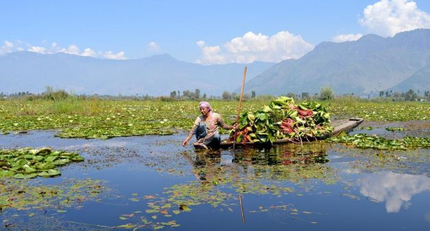 Fishing and other rural communities that have traditionally depended on Wular Lake are now struggling to earn a living from it, as shrinkage, siltation and ecological degradation take a toll on Kashmir's largest flood basin . (Photo by Athar Parvaiz)