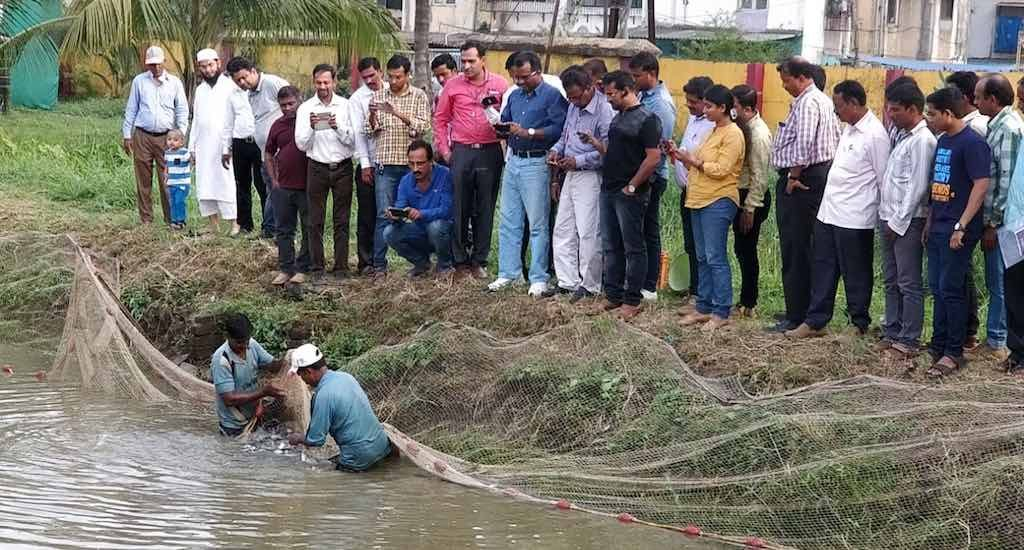 Rearing fish in farm ponds boosts rural incomes