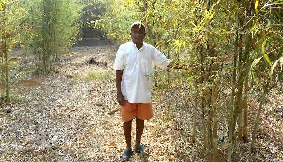 Rane Guruji, an 80-year-old farmer of Kasal village, in his bamboo plantation. (Photo by Hiren Kumar Bose)