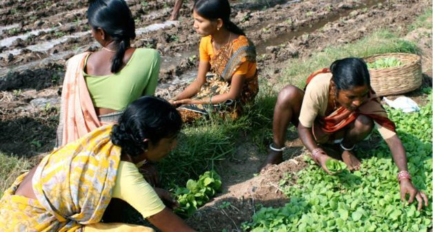 Practicing organic farming, farmers no longer have health issues. Photo credit: GV Ramanjaneyalu