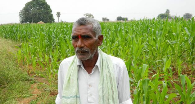 Switching to organic farming, Enabavi's arid lands have turned green, thanks to the initiative of village chief Ponnam Mallaya. (Photo by Chithra Ajith)