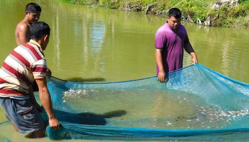 Producing fish seeds provides a sustainable livelihood to unemployed youth in Assam. (Photo by Abdul Mannan Choudhury)