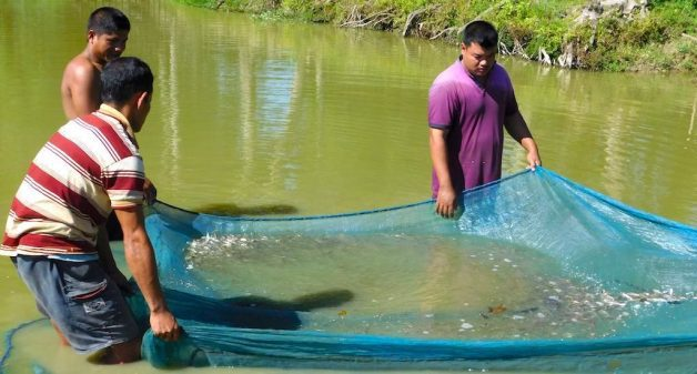 Assam youth are netting healthy incomes from fish seeds