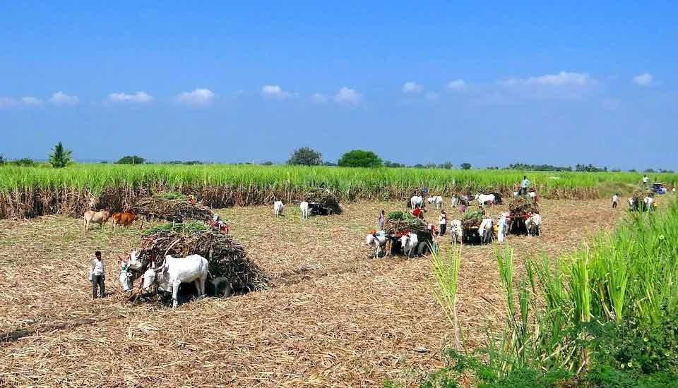 New farmer organizations need careful handholding. (Photo by Bishnu Sarangi)