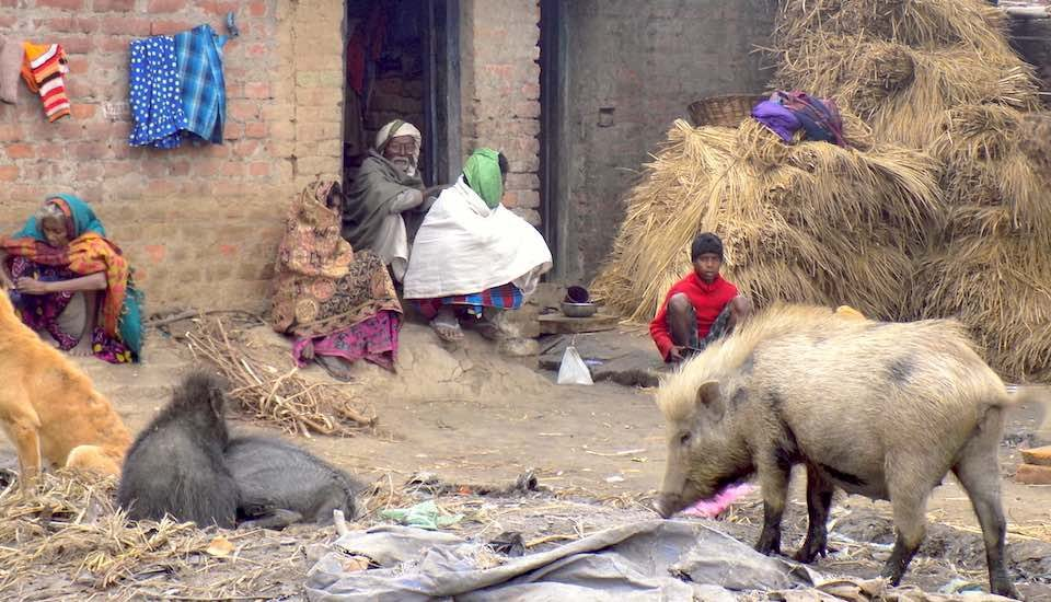 The Musahar community is still living in squalor across villages in Bihar. (Photo by Mohd Imran Khan)