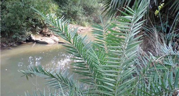 Water in the natural depressions is not sufficient for irrigation. (Photo by Gautam Sarkar)