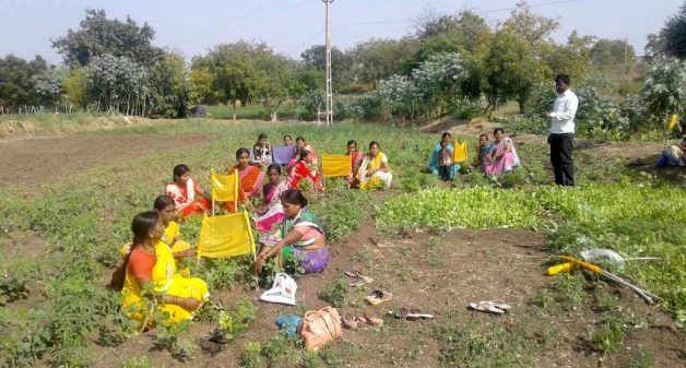 Women farmers in Solapur are field-trained in growing a wide variety of crops. (Photo by Swayam Shikshan Prayog)